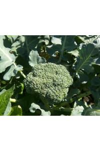 Масло Семян Брокколи нерафинированное 10мл